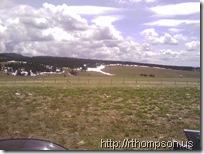 2009-06-13 13.46.12 - (IMAG0348)